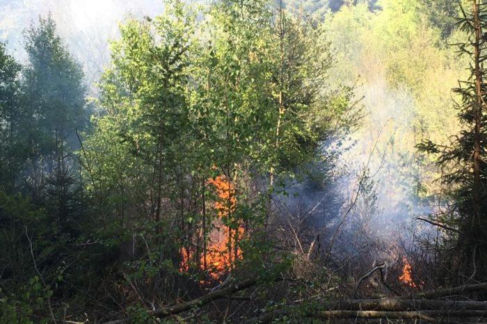 Löschgruppe Endorf bei Waldbrand in Stemel im Einsatz