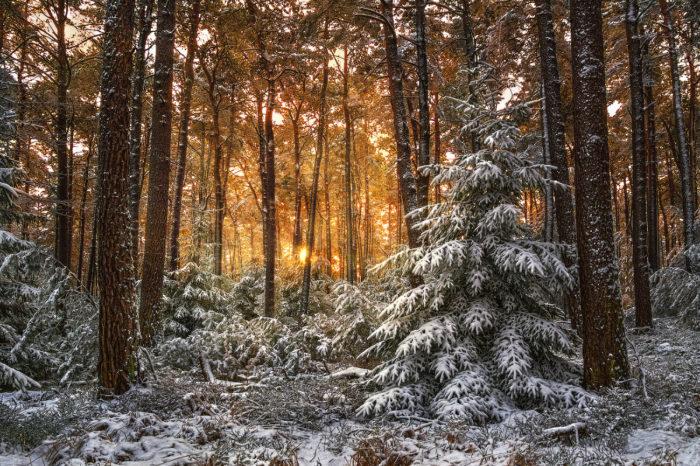 Weihnachts - und Neujahrsgrüße des Ortsvorstehers